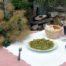 Okusni česnovi poganjki