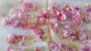 Sušenje cvetov vrtnice