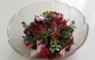 Koristna in uporabna divja rastlina