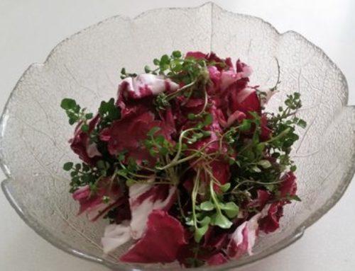 Dlakava penuša – koristna in okusna divja rastlina