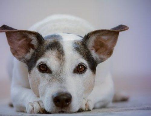 Govoreči pes