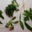 Divje rastline